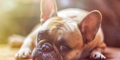 Hundekrankenversicherung: Ist eine Krankenversicherung für Ihr Hund sinnvoll?